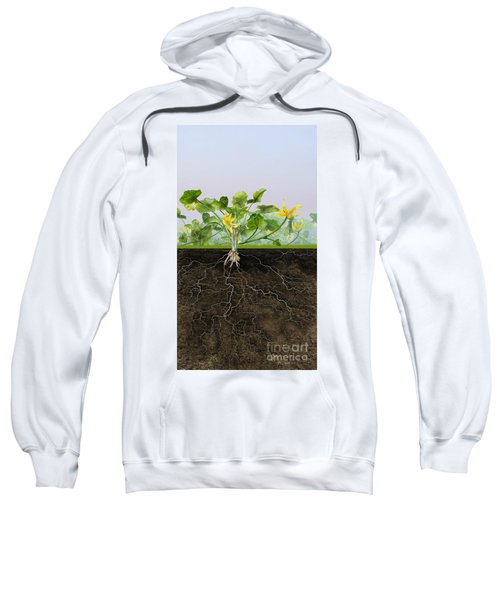 Pilewort Or Lesser Celandine Ranunculus Ficaria - Root System -  Sweatshirt