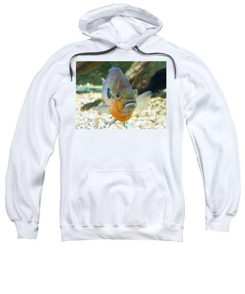 Piranha Behind Glass Sweatshirt