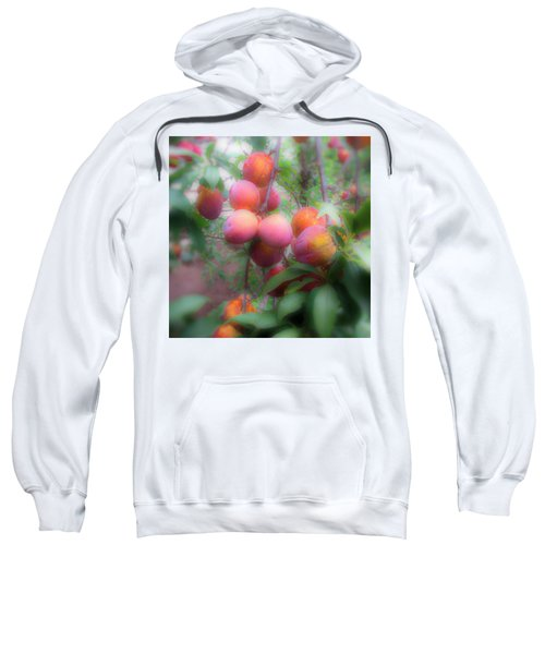Plum Delight Sweatshirt