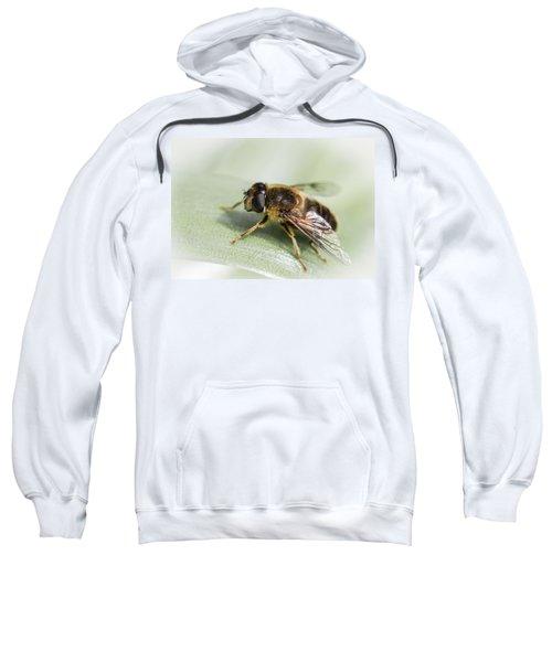 Pollen Dusted Sweatshirt