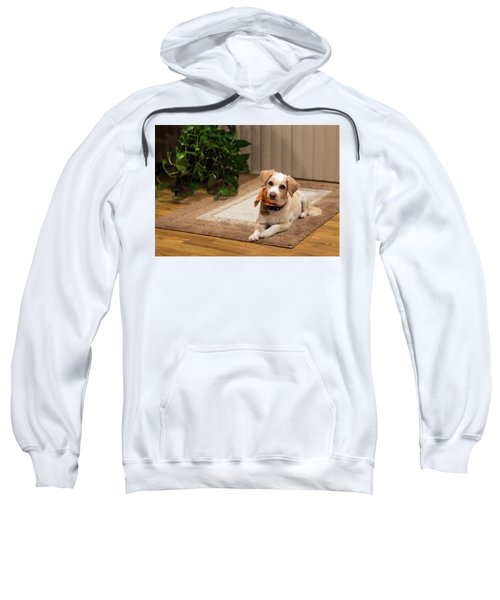 Portrait Of A Dog Sweatshirt
