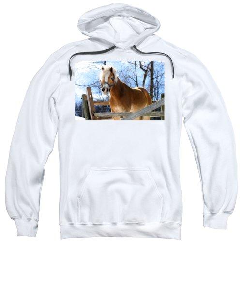 Portrait Of A Haflinger - Niko In Winter Sweatshirt