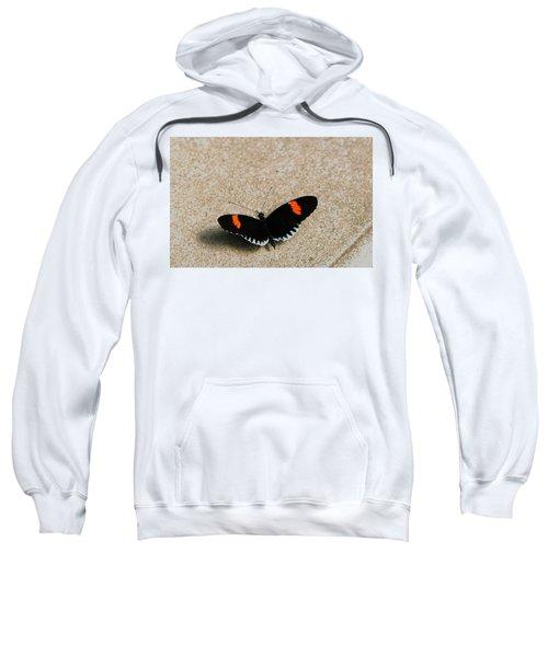 Postman Butterfly Sweatshirt