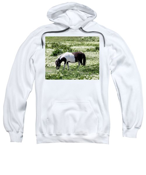 Pretty Painted Pony Sweatshirt by James BO Insogna