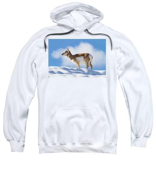 Pronghorn Doe On Snowy Ridge Sweatshirt