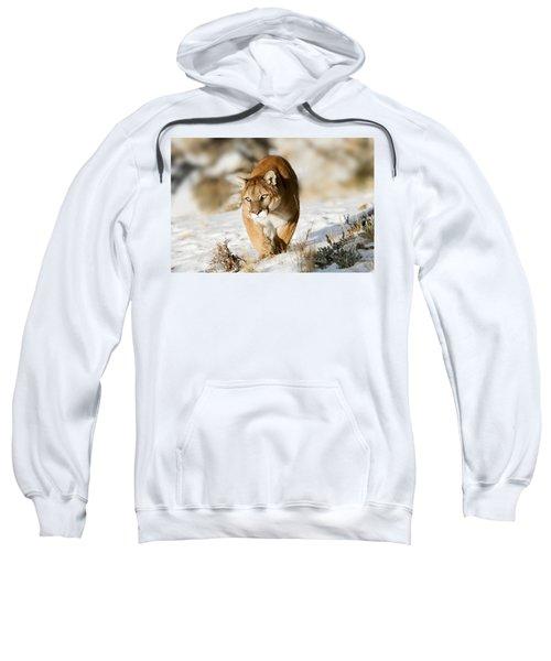 Prowling Mountain Lion Sweatshirt