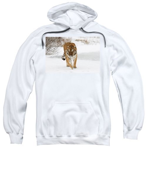Prowling Tiger Sweatshirt