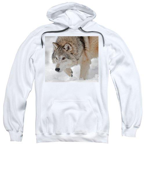 Prowling Wolf Sweatshirt