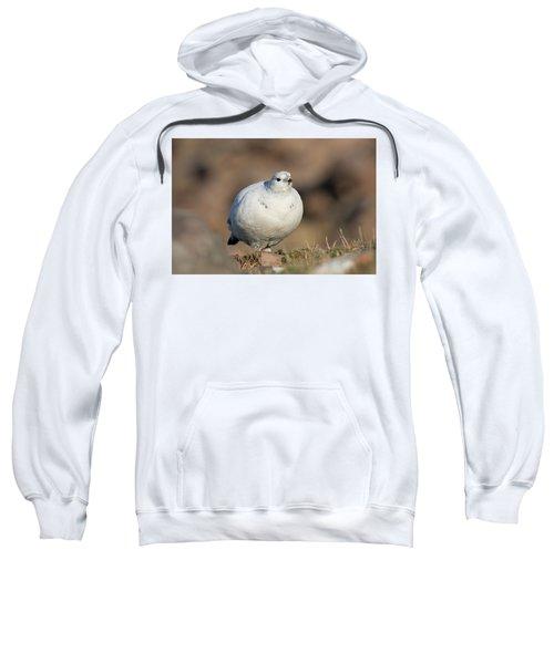 Ptarmigan Going For A Stroll Sweatshirt