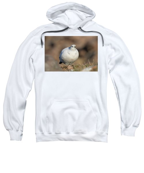 Ptarmigan Going For A Stroll Sweatshirt