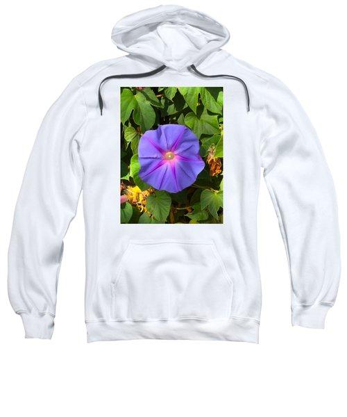 Purple Star Sweatshirt