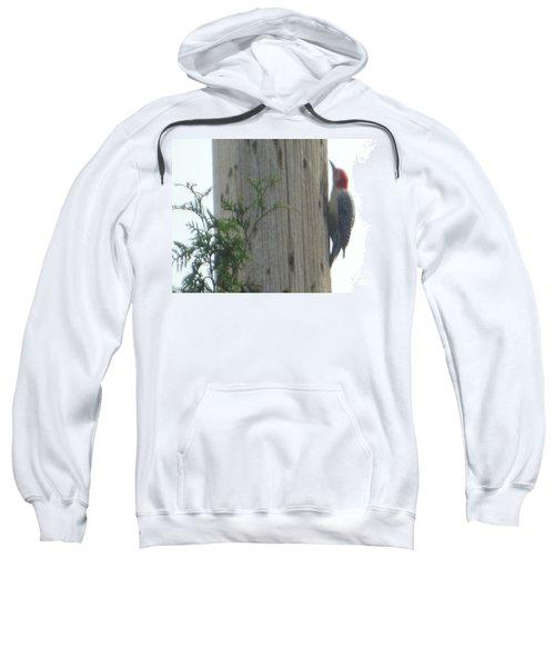 Red Bellied Woodpecker Sweatshirt