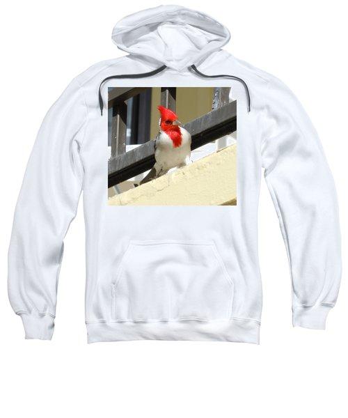Red-crested Cardinal Posing On The Balcony Sweatshirt