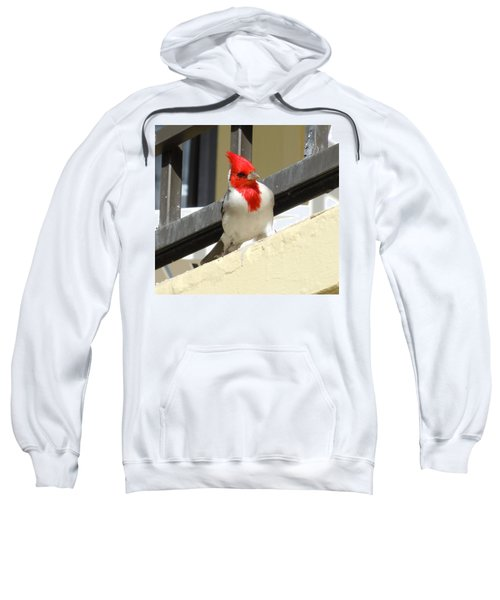 Red-crested Cardinal Posing On The Balcony Sweatshirt