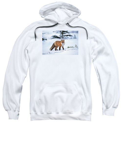Red Fox Vulpes Vulpes Portrait Sweatshirt