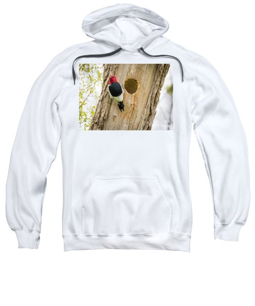 Red-headed Woodpecker At Home Sweatshirt