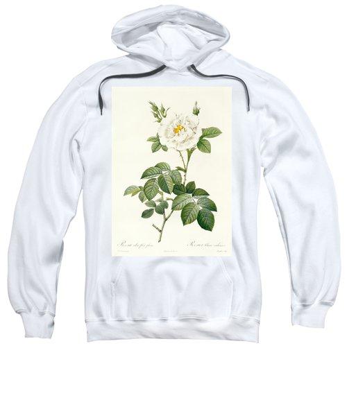 Rosa Alba Flore Pleno Sweatshirt