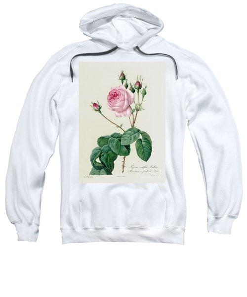 Rosa Centifolia Bullata Sweatshirt