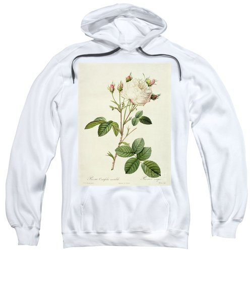 Rosa Centifolia Mutabilis Sweatshirt