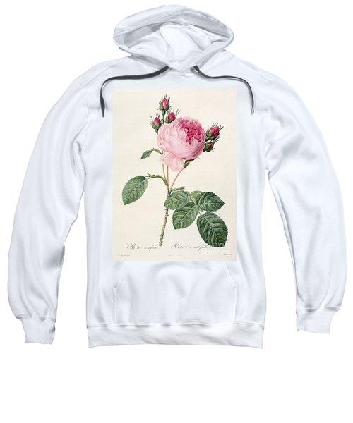 Rosa Centifolia Sweatshirt