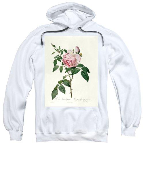 Rosa Chinensis And Rosa Gigantea Sweatshirt