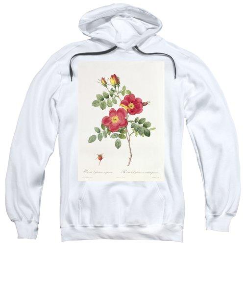 Rosa Eglantera Punicea Sweatshirt