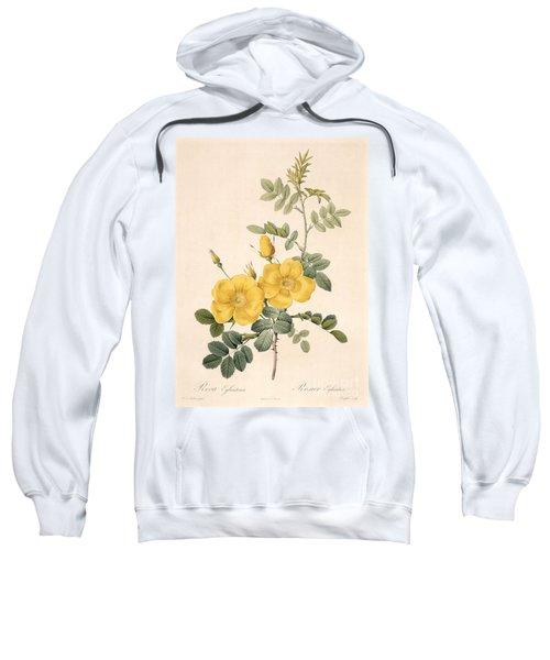 Rosa Eglanteria Sweatshirt