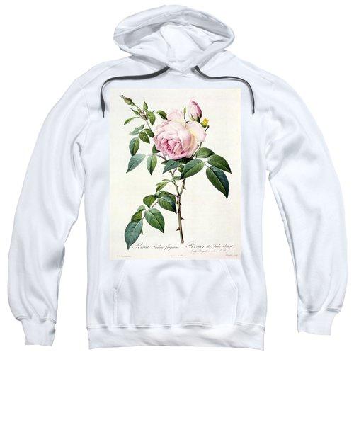 Rosa Indica Fragrans Sweatshirt
