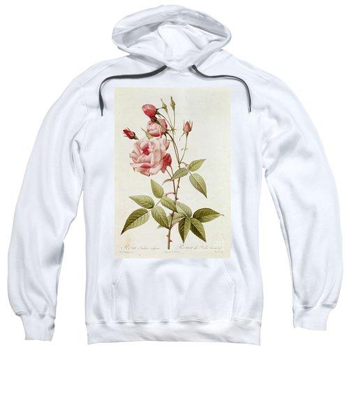 Rosa Indica Vulgaris Sweatshirt