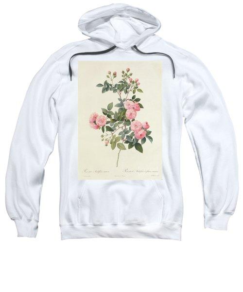 Rosa Multiflora Carnea Sweatshirt