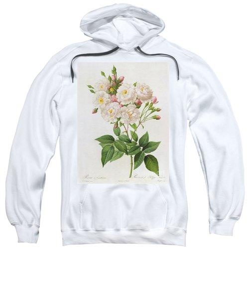 Rosa Noisettiana Sweatshirt