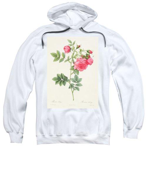 Rosa Pimpinellifolia Flore Variegato  Sweatshirt