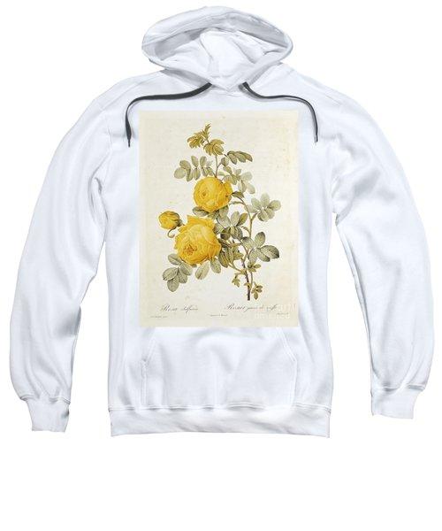 Rosa Sulfurea Sweatshirt