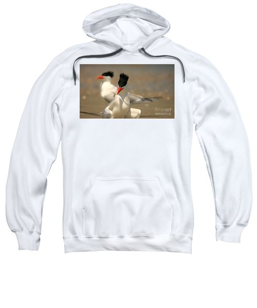 Royal Tern Catch Sweatshirt