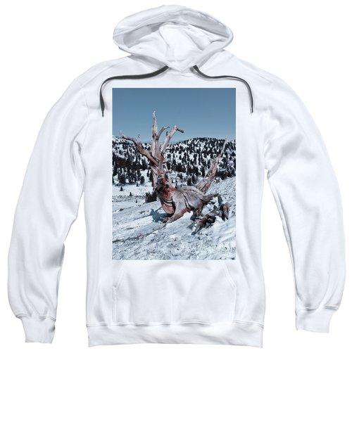 Sweatshirt featuring the photograph Skating Pine by Mae Wertz