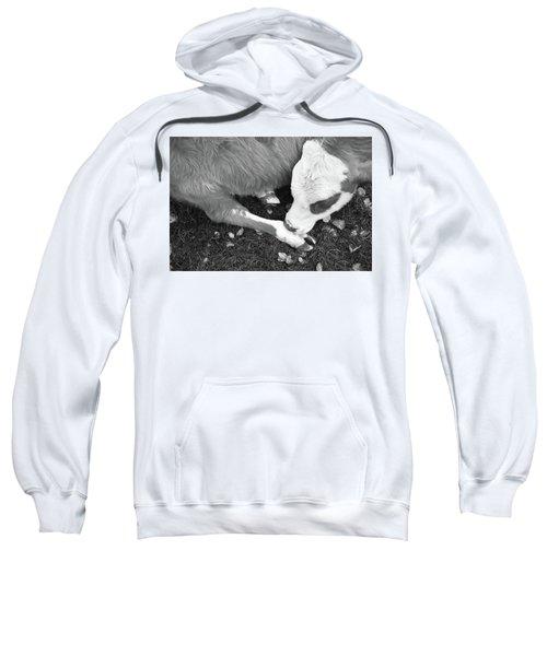 Sleeping Calf Bw Sweatshirt