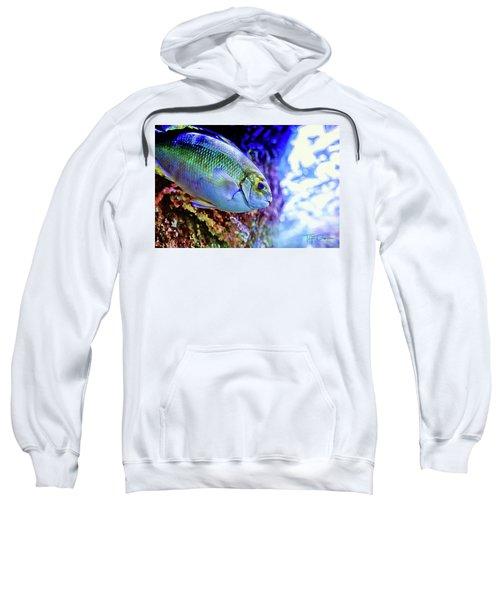 Splash Of Color Sweatshirt