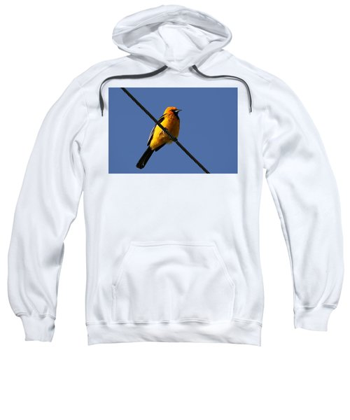 Spot Breasted Oriole Sweatshirt