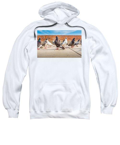 Street Pigeons. Sweatshirt