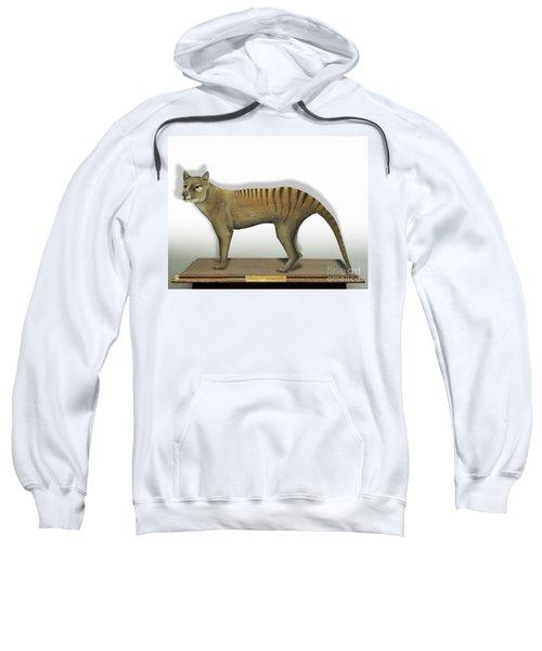 Tasmanian Tiger-thylacinus Cynocephalus-tasmanian Wolf-lobo De Tasmania-tasmanian Loup-beutelwolf    Sweatshirt