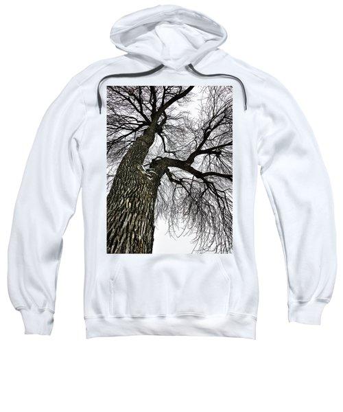 The Old Tree Sweatshirt