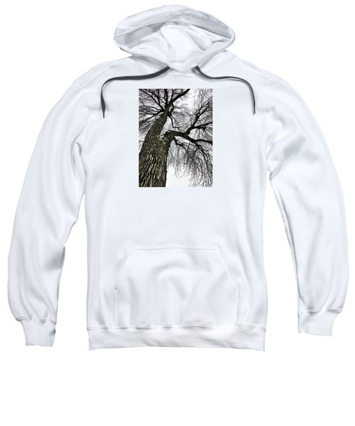 The Old Tree Sweatshirt