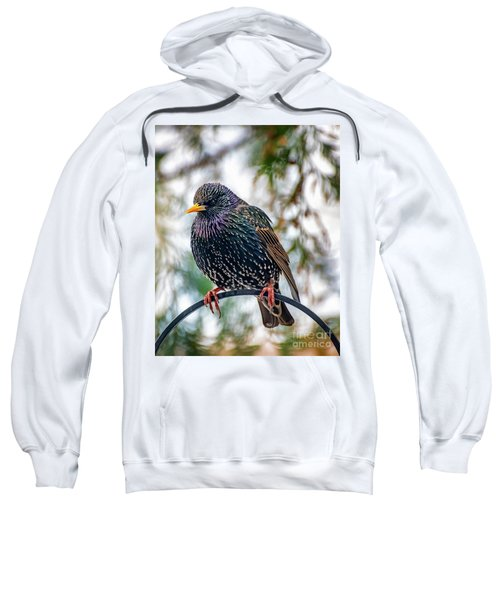 The Starling Sweatshirt