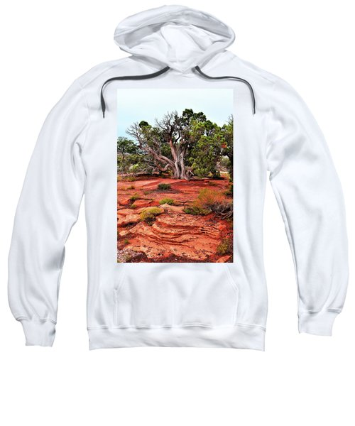 The Tree That Knows All Sweatshirt