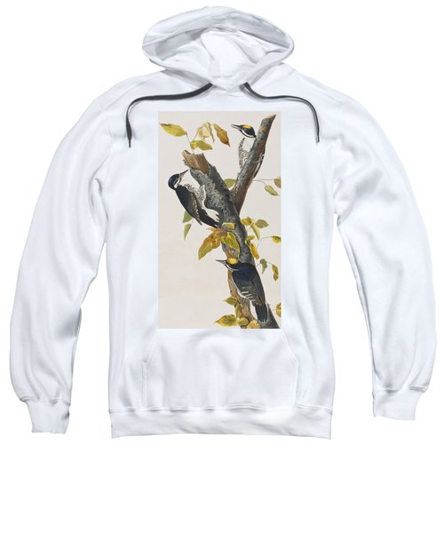 Three Toed Woodpecker Sweatshirt by John James Audubon
