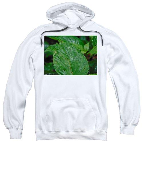 Trail Vibes Sweatshirt