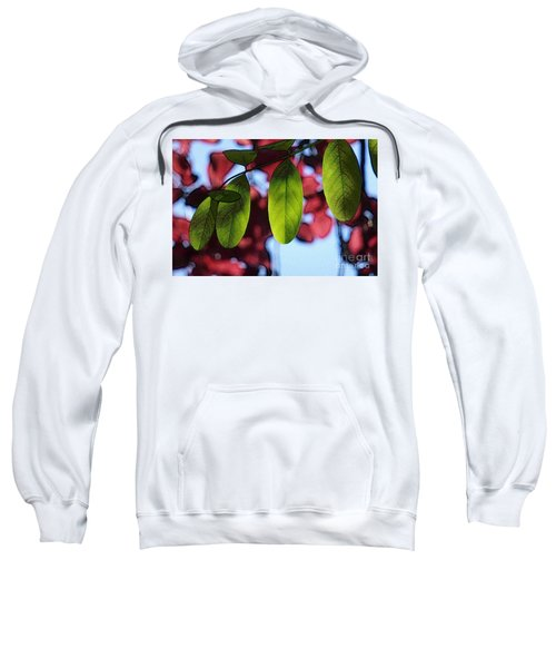 Transparence 21 Sweatshirt