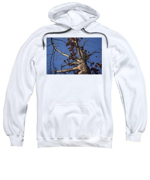 Tree And Branch Sweatshirt