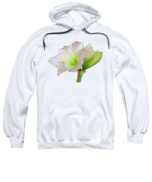 White Amaryllis On White Sweatshirt