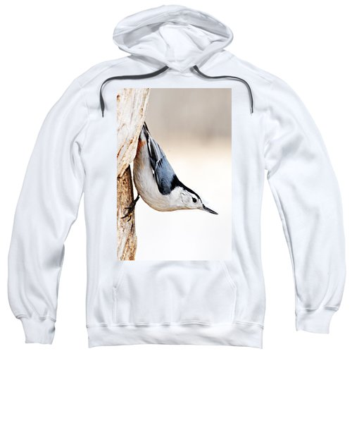 White-breasted Nuthatch Sweatshirt